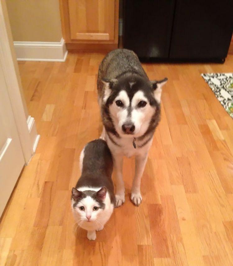 Эти милые животные от разных родителей, а похожи как родные