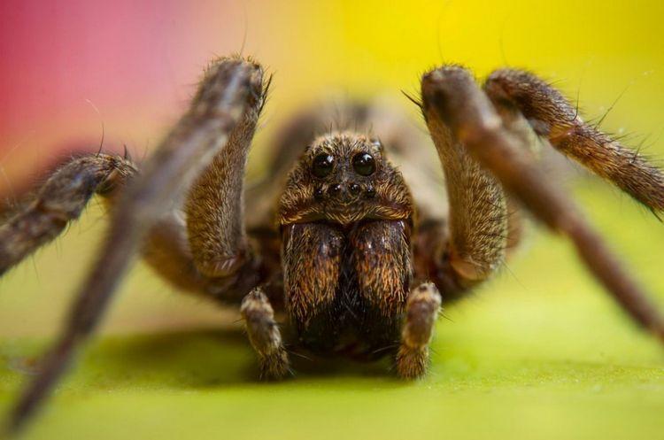 Фото пауков крупным планом: выяснилось, где режиссеры ужасов черпают вдохновение